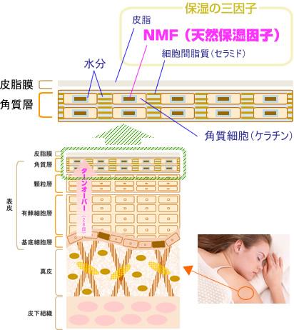 NMF(天然保湿因子)